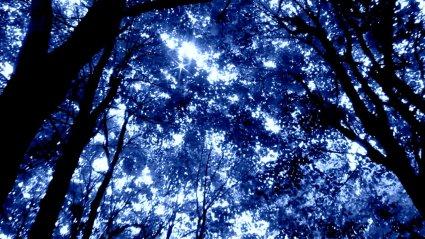 MVI_2290-001 - blue